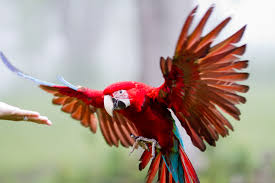 Parrot Decorations Home by Best Parrots Landing Apartments Beautiful Home Design Top With