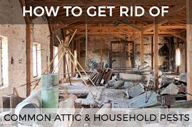 How To Hunt Squirrels In Your Backyard by The Guide To Getting Rid Of Common Attic U0026 Household Pests