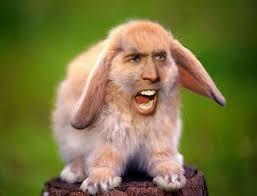 Nicolas Cage Face Meme - nic cage as everyone
