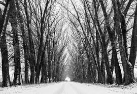 Way To Winter Perspective Road Stock Photo Image Of Frosty Concept 29887870