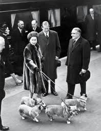 queen elizabeth dog queen elizabeth and her corgis a love story prince philip