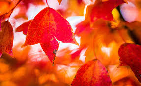 autumn color has finally arrived so here s a for