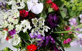 Flowers Wholesale Wholesale Flowers Orange County Fuji Wholesale Flowers