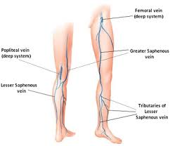 Foot Vascular Anatomy Anatomy Organ Pictures Veins Of The Leg Anatomy New Collection