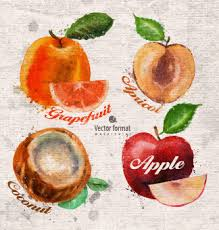 vector fruit watercolor painting free vector download 7 183 free