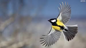 bird wallpaper fabulous beautiful birds hd wallpapers hd