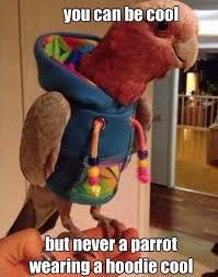 Parrot Meme - funny memes collection funny parrot memes