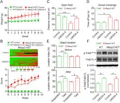 a small molecule trkb ligand restores hippocampal synaptic