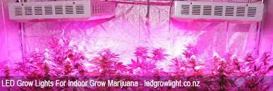 led marijuana grow lights led grow lights in new zealand