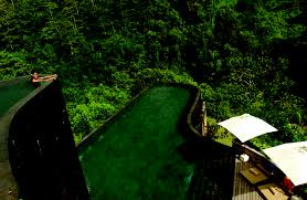 top 10 amazing swimming pools in the world decor woo ubud hanging gardens