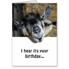 send funny birthday wishes with this cute and nosy goat greeting