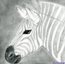 8 how to draw a zebra draw a realistic zebra