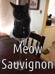 Wine Glass Meme - wine glass kitten meme prrrrr pinterest cat cat cat and animal
