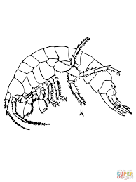 freshwater shrimp coloring page free printable coloring pages