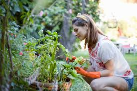 Landscaping Job Description For Resume by Landscaping And Garden Skills For Resumes And Websites