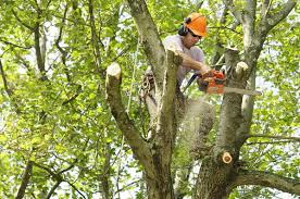 tree services omar s remodeling