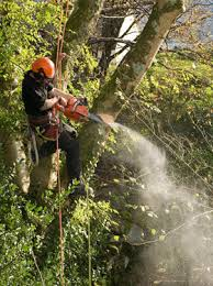 professional tree work llanwrst david jones tree services