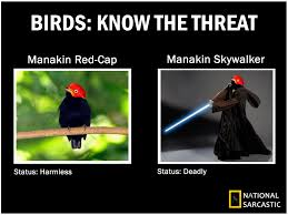 Animal Pun Meme - anakin manakin name puns know your meme