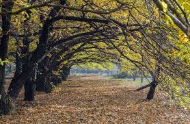 Vermont travel watch images These pictures of the majestic chinar trees from kashmir right now jpg