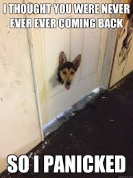 Anxiety Meme - separation anxiety how to make your dog comfortable when it s time