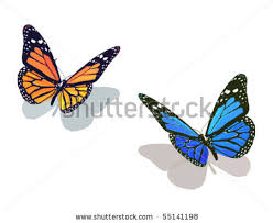 of two colorful butterflies on a white background