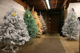 buying a christmas tree minnesota prairie roots