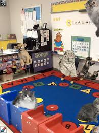 crazy cat lady speech room news