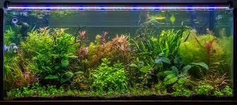 Substrate Aquascape Blog U2014 Sunken Gardens