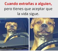 Buenos Memes En Espaã Ol - 40 imágenes y memes chistosos 2017 imagenes chistosas