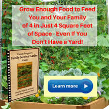planting companion vegetables and herbs and fruit tree companion