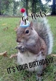 Squirrel Nuts Meme - joke4fun memes go nuts