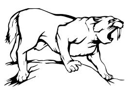 coloriage tigre à dents de sabre coloriages à imprimer gratuits