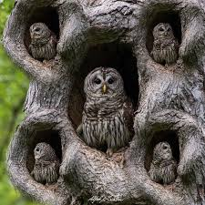 best 25 owl species ideas on owls beautiful owl and