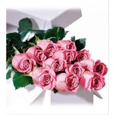 Long Stem Roses Rose Rose In Box 1 Dozen Pink Long Stem Roses In A Box