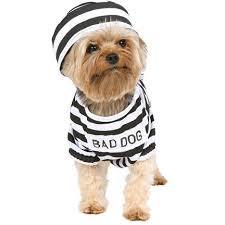 Cute Dog Halloween Costumes 72 Pets Costumes Images Animals Costumes