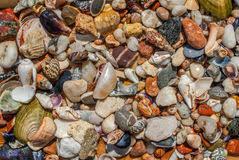 Assorted Seashells Assorted Seashells And Pebbles Texture Background Stock Image