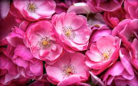 natural flowers images and wallpapers download