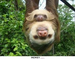 Funny Sloth Pictures Meme - sloth memes funny sloth pictures memey com