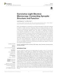 correlative light electron microscopy connecting synaptic