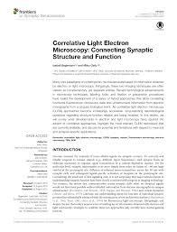 correlative light electron microscopy connecting synaptic