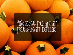 Local Pumpkin Patches The Best Pumpkin Patches In Dallas Fort Worth Dallas Socials