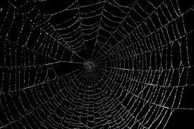 halloween background funny spider web backgrounds group 38
