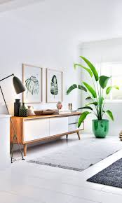 best 25 living room plants ideas on pinterest apartment plants