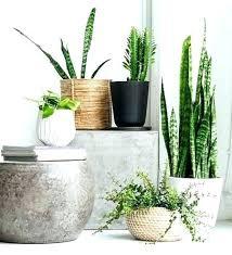 decorative indoor plants decorative indoor planters plant pots terrain pertaining to for