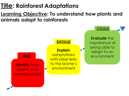 Adaptations Of Tropical Rainforest Plants - how plants adapt to tropical rainforests by musharipple21