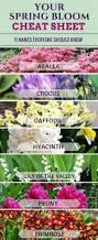 Plant Flower Garden - 17951 best beautiful flower gardens images on pinterest