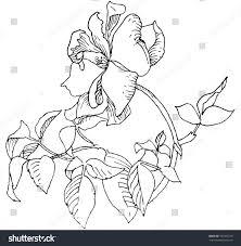 sketch roses stock vector 101563279 shutterstock