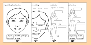 body parts labelling worksheet spanish body parts