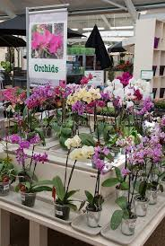 orchids for sale orchids for sale in garden center nursery plant flower stock