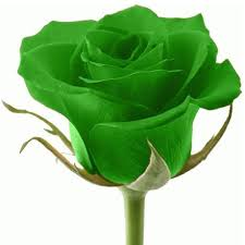 green roses green roses meaning find positive meanings angst